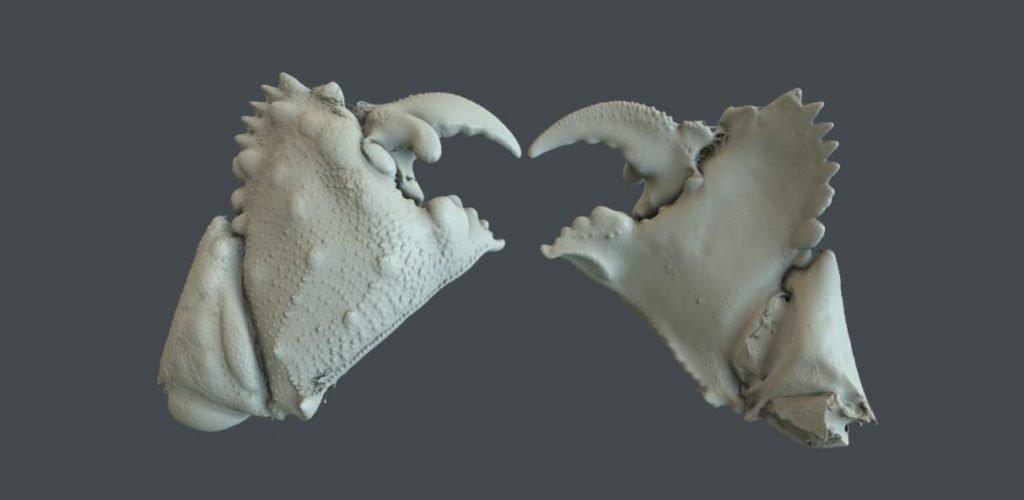 Scansione 3D con Cooperativa Climax