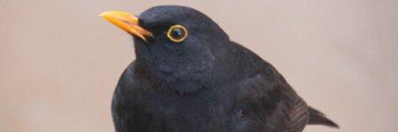 BIRDWATCHING URBANO GIUGNO 2021